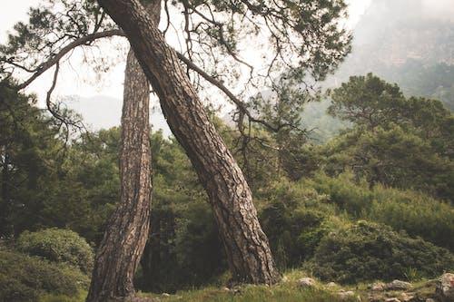 Foto stok gratis alam, berkabut, di luar rumah, hutan