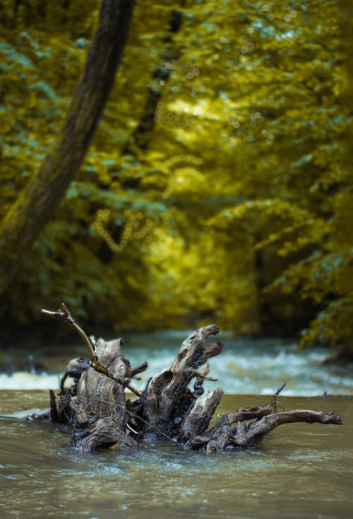 Tree Trunk On A River