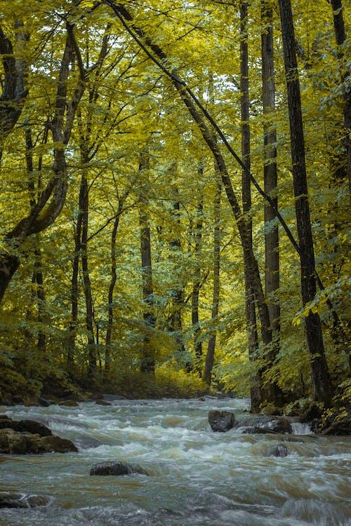 açık hava, ağaç gövdeleri, ağaçlar, akan içeren Ücretsiz stok fotoğraf