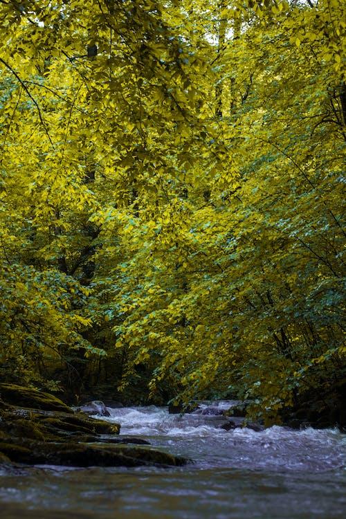Gratis stockfoto met Bemoste rotsen, bladeren, bomen, Bos