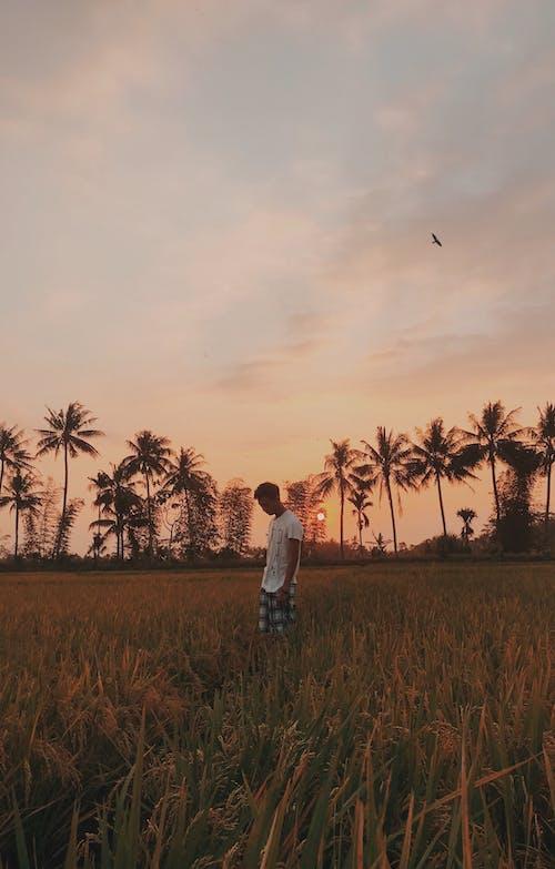 Photos gratuites de coucher de soleil, destination de voyage, indé, voyager