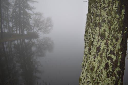 Darmowe zdjęcie z galerii z drzewo, jezioro, mech, natura