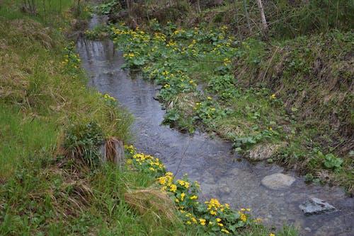 Darmowe zdjęcie z galerii z natura, potok, środowisko, woda