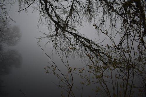 Darmowe zdjęcie z galerii z jezioro, natura, środowisko, woda