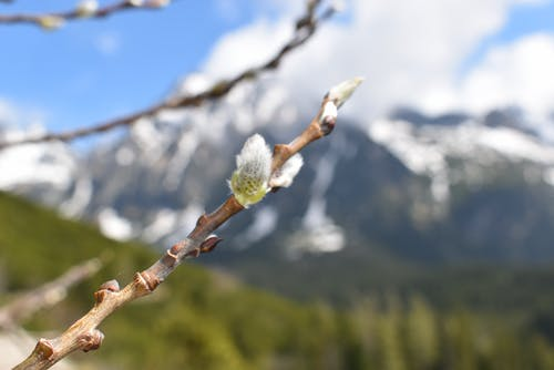 Darmowe zdjęcie z galerii z drzewo, góry, śnieg, sprężyna