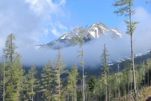 Darmowe zdjęcie z galerii z chmury, drzewa, góry, las