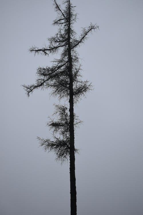 Darmowe zdjęcie z galerii z drzewo, natura, ponury, zamglenie