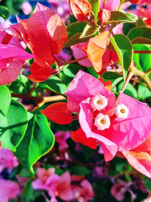 Foto d'estoc gratuïta de art pintoresc, bellesa a la natura, colorit, flor rosa
