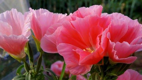 bahar, Çiçekler içeren Ücretsiz stok fotoğraf
