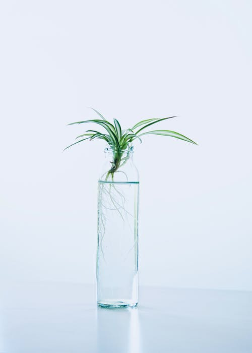 Photo of Green Leafed Plant in Bottle With Water