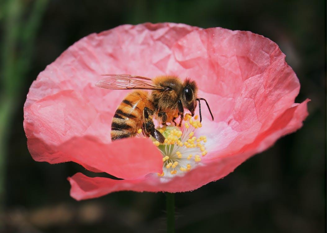 กลีบดอกไม้, การถ่ายภาพมาโคร, การถ่ายภาพสัตว์