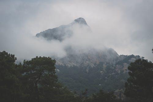 Foto d'estoc gratuïta de alba, amb boira, arbres, aventura