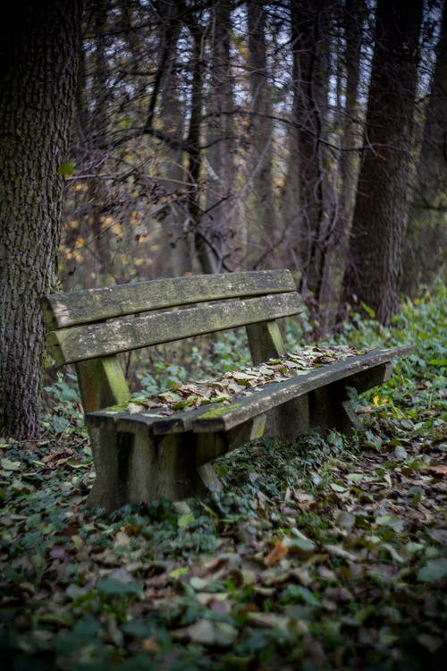 Brown Wooden Bench Surrounded by Trees