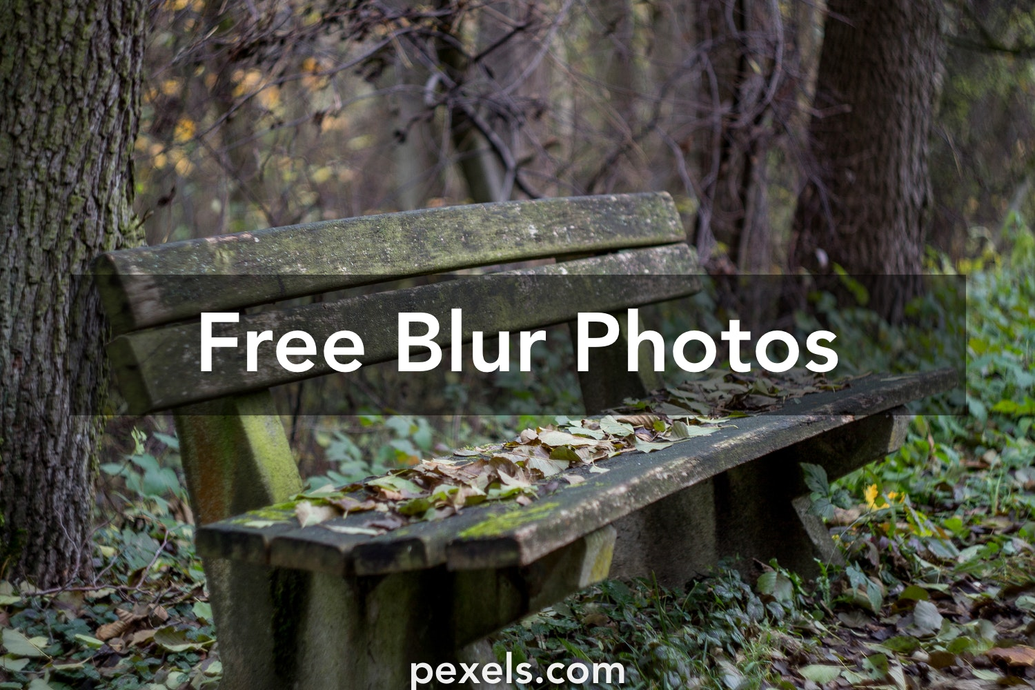 Blur Images Pexels Free Stock Photos