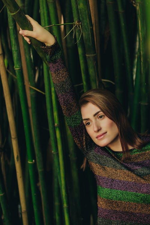 Imagine de stoc gratuită din adult, arbori, bambus, căutare