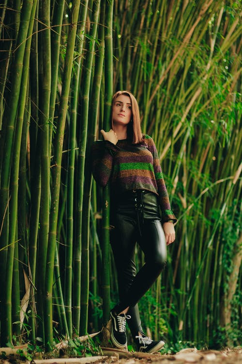 대나무, 모델, 사람