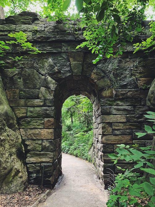 Fotos de stock gratuitas de Central park, nueva York, sendero