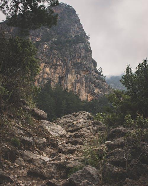 açık hava, ağaçlar, çevre, dağ içeren Ücretsiz stok fotoğraf