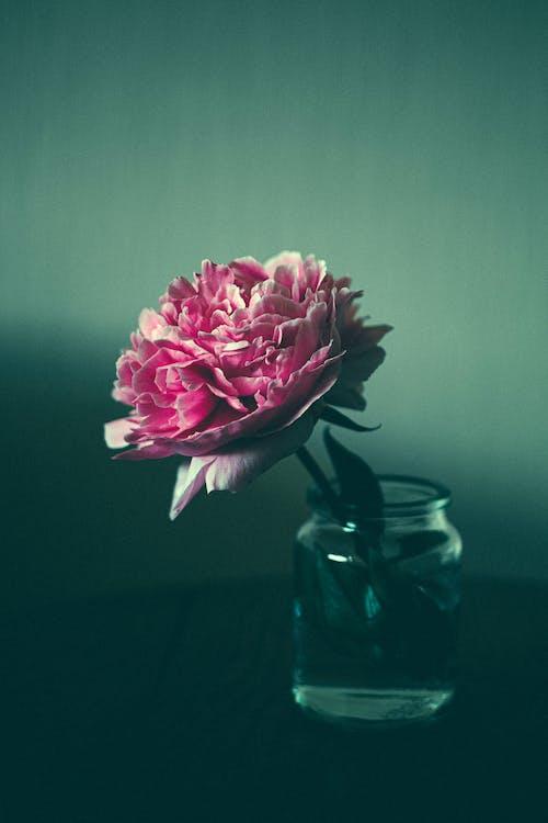 การถ่ายภาพหุ่นนิ่ง, กำลังบาน, ดอกไม้