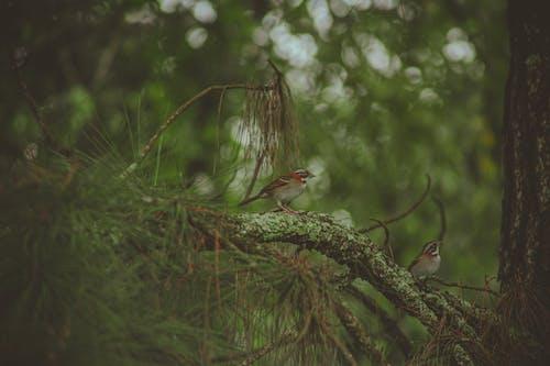 Foto stok gratis bangsa burung, bertengger, binatang, burung-burung