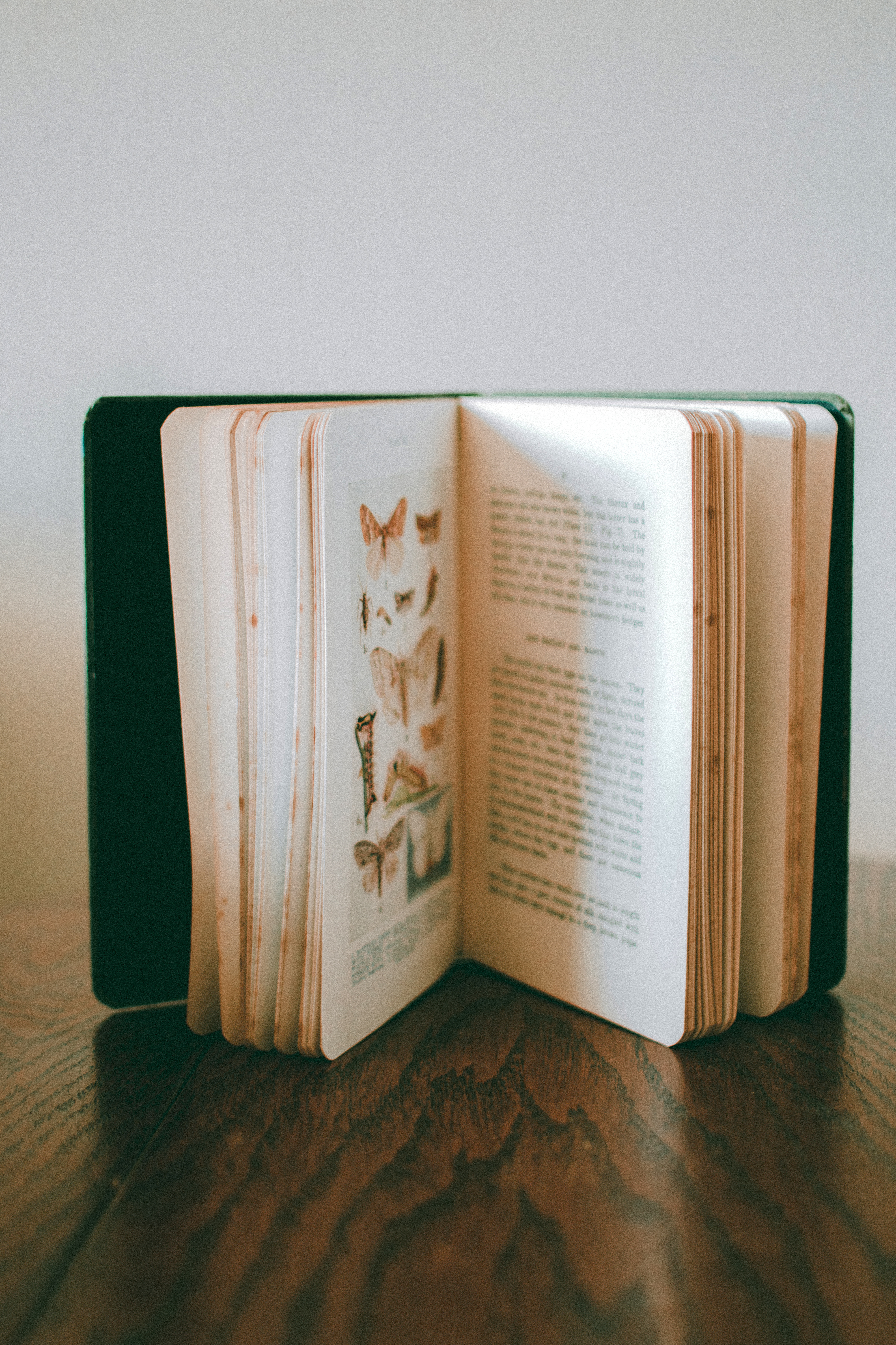 Close-Up Photo of Opened Book