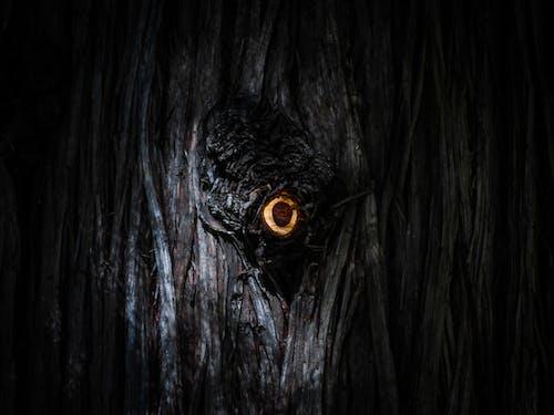 คลังภาพถ่ายฟรี ของ ตา, มืด, ร่มครึ้ม, ร่มเงา