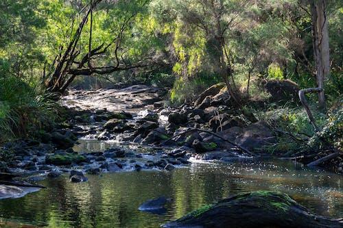 Kostnadsfri bild av bäck, filtrerat ljus, flödande vatten, ljus och skugga