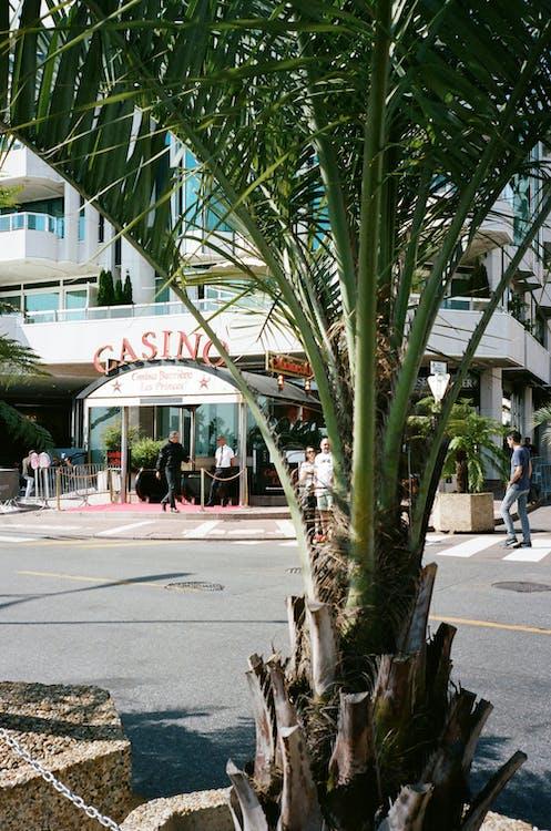 Palm Tree Across A Building