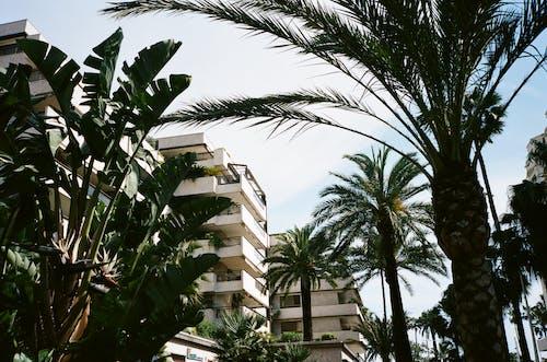エキゾチック, トロピカル, パルム, ホテルの無料の写真素材