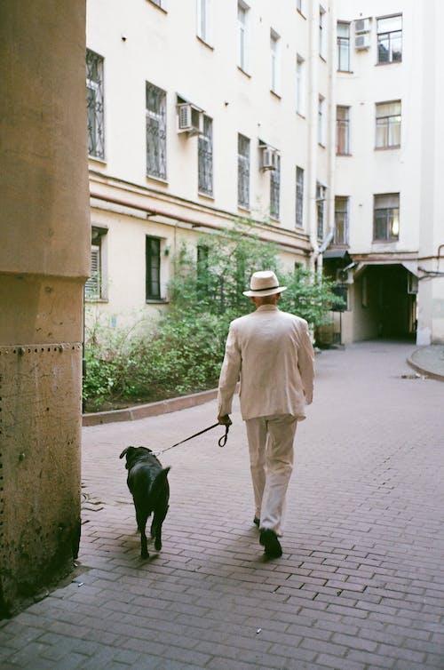 Ảnh lưu trữ miễn phí về các tòa nhà, chó, kiến trúc, vật nuôi