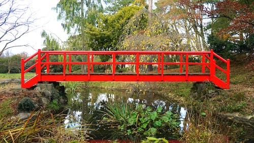 Бесплатное стоковое фото с вода, деревья, дорога, живописный