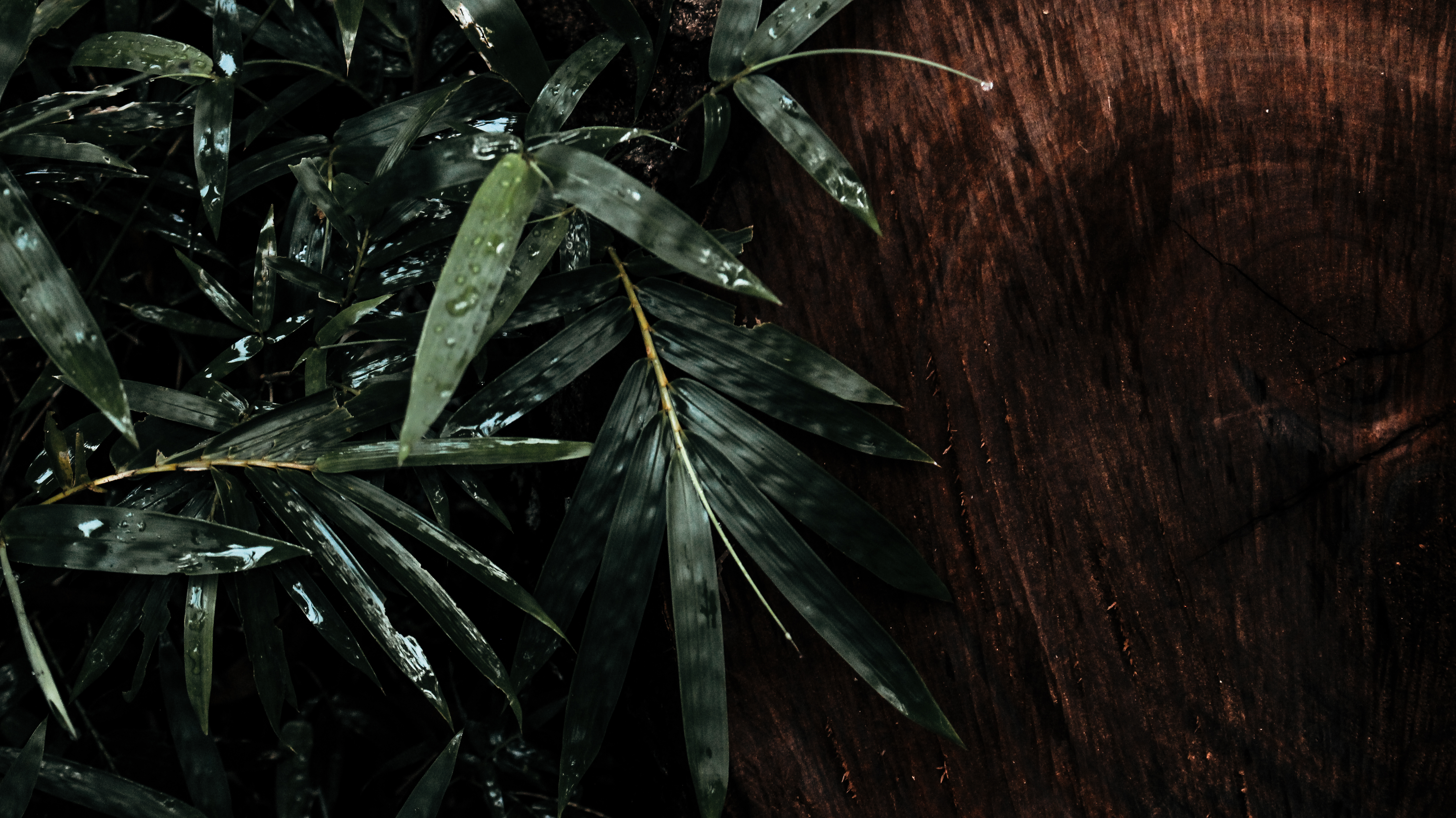 Green Bamboo Leaf Close-up Photography