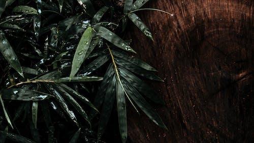 Foto stok gratis air, bambu, basah, Daun-daun
