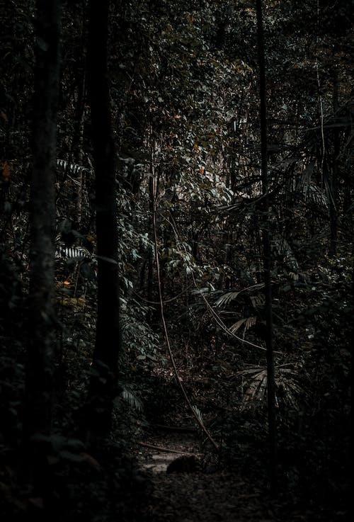 Foto stok gratis cahaya, dinding, gelap, hitam