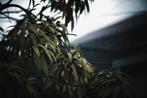 Základová fotografie zdarma na téma déšť, dešťové kapky, list, listy