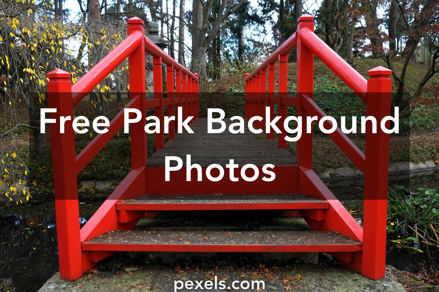 1000+ Interesting Park Background Photos · Pexels · Free Stock Photos