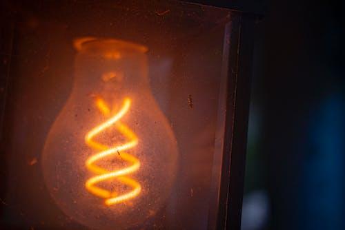 小蟲, 燈泡 的 免费素材照片