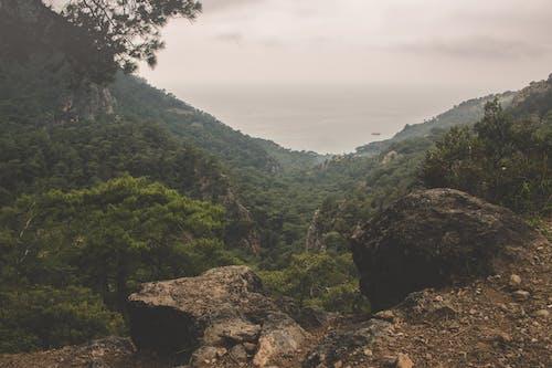Foto d'estoc gratuïta de a l'aire lliure, alt, arbres, bosc
