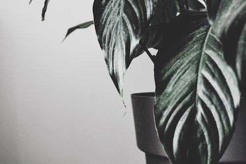 Základová fotografie zdarma na téma džungle, exotický, kreativní, les