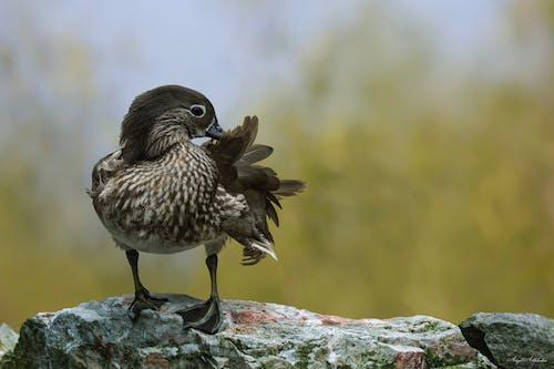 動物, 動物攝影, 棲息, 棲息的鳥 的 免費圖庫相片