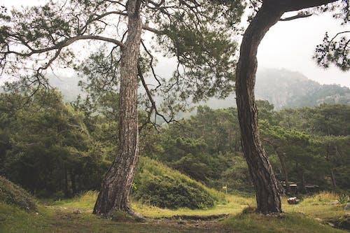 Foto stok gratis alam, alami, awan, berawan