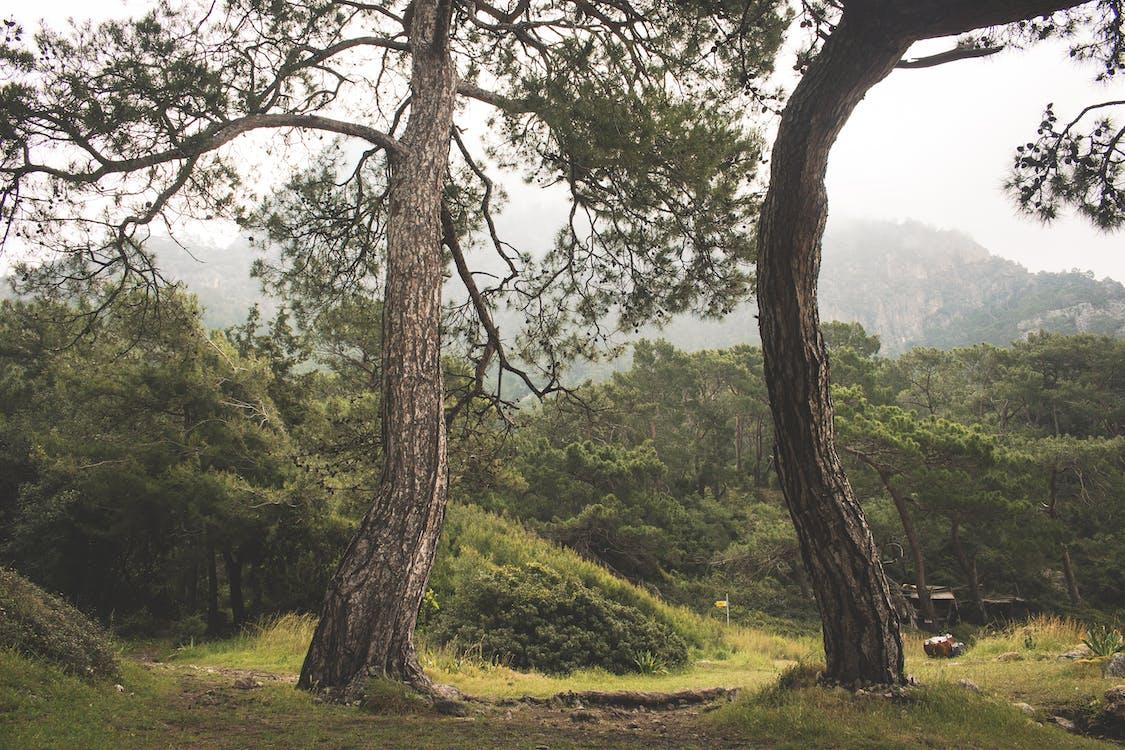 chmury, drzewa, fotografia przyrodnicza