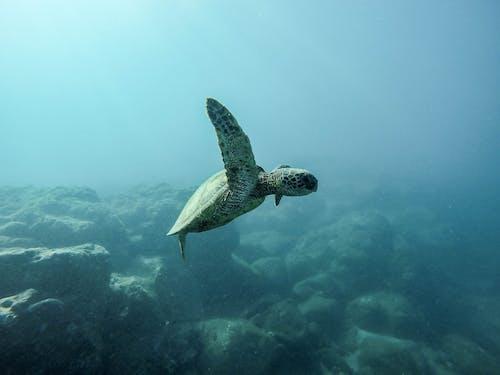 거북이, 동물, 동물 사진, 물의 무료 스톡 사진