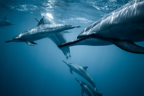 Photo of Pod of Dolphins