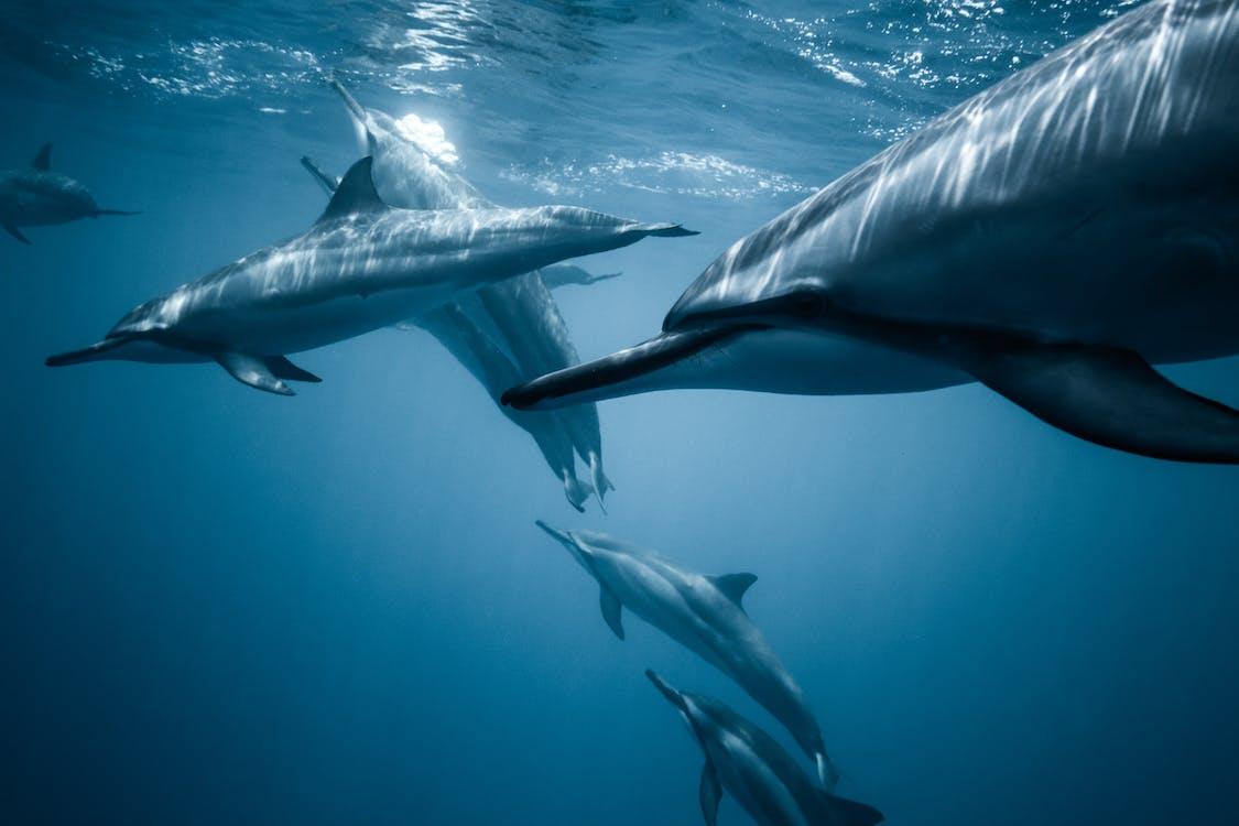 delfíni, divočina, dobrodružství