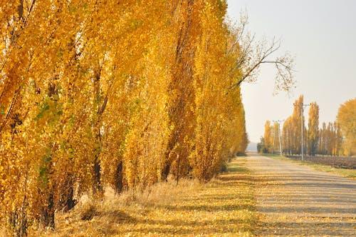 Fotos de stock gratuitas de ambiente, arboles, carretera, cielo limpio