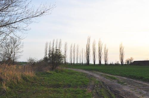 Fotos de stock gratuitas de arboles, camino rural, césped verde, cielo azul