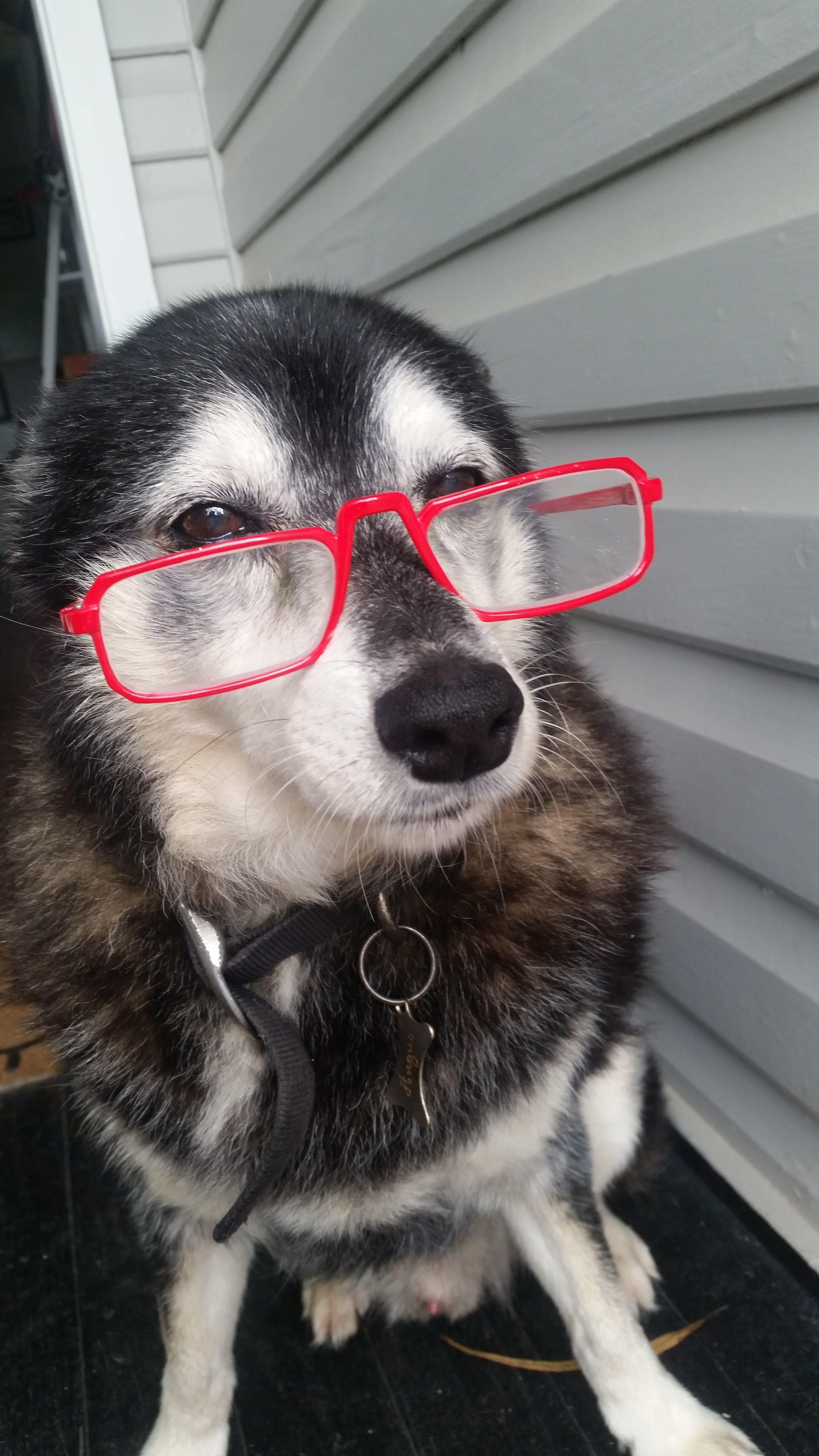 Free stock photo of dog, cute, animals, domestic animal