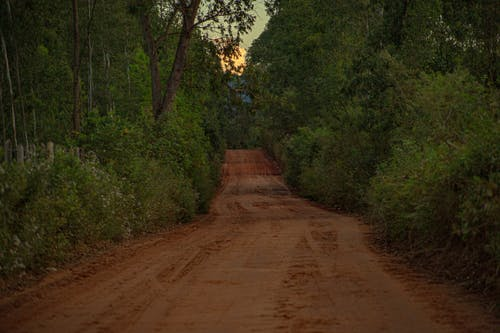 Brown Dirt Road Lined With Trees