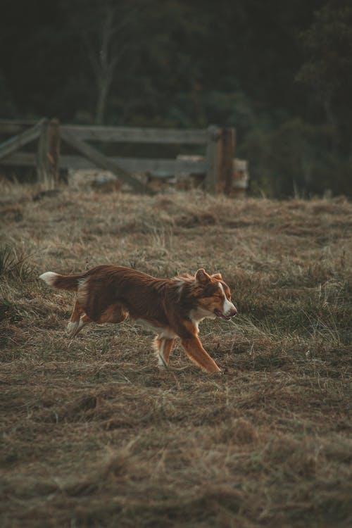 Running Dog on Field